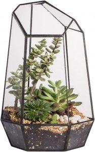 9.8 inches Height Indoor Tabletop Irregular Glass Geometric Air Plants Terrarium Box Desktop Display Planter Succulent Holder Flower Pot for Fern Moss DIY