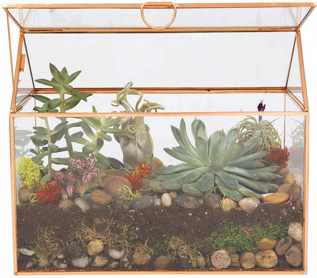 Deco Glass Terrarium