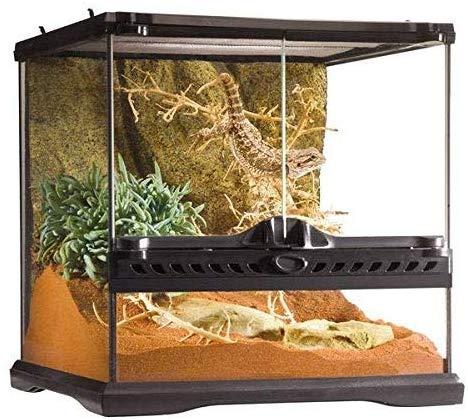 Exo Terra Glass Reptile Terrarium, 12 by 12 by 12 inch