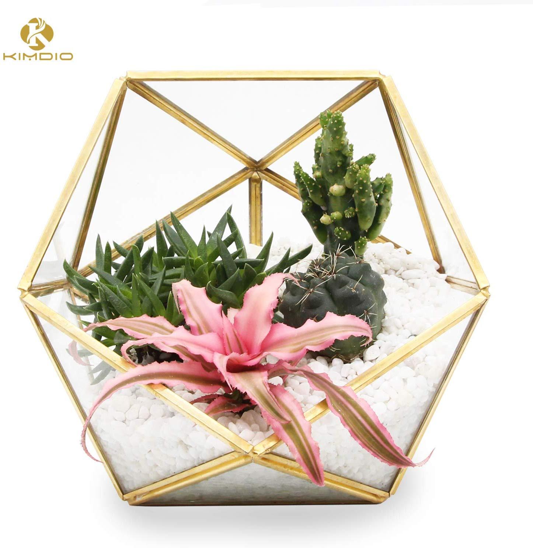 Kimdio Geometric Terrarium Clear Glass