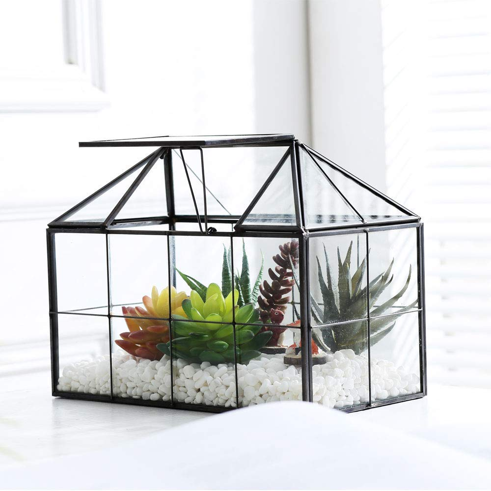Purzest Glass Terrarium