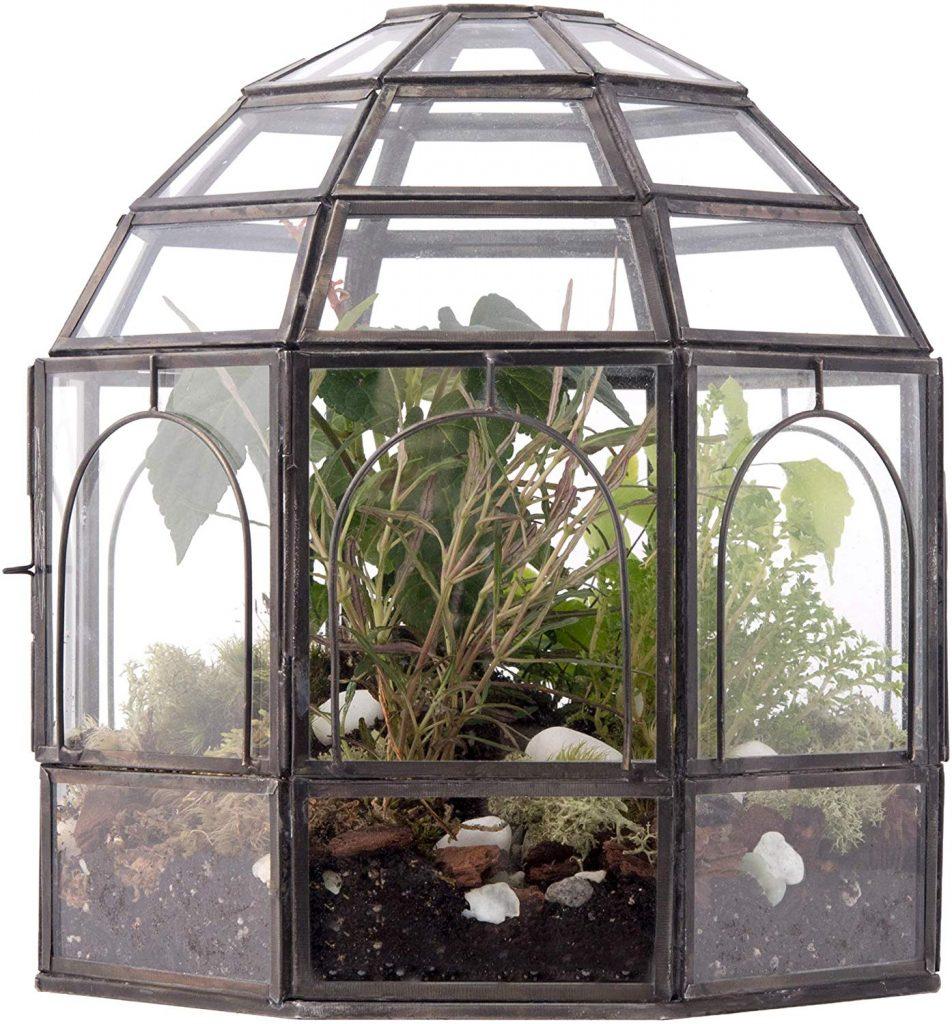 Urban Born- Large Handmade Glass Terrarium