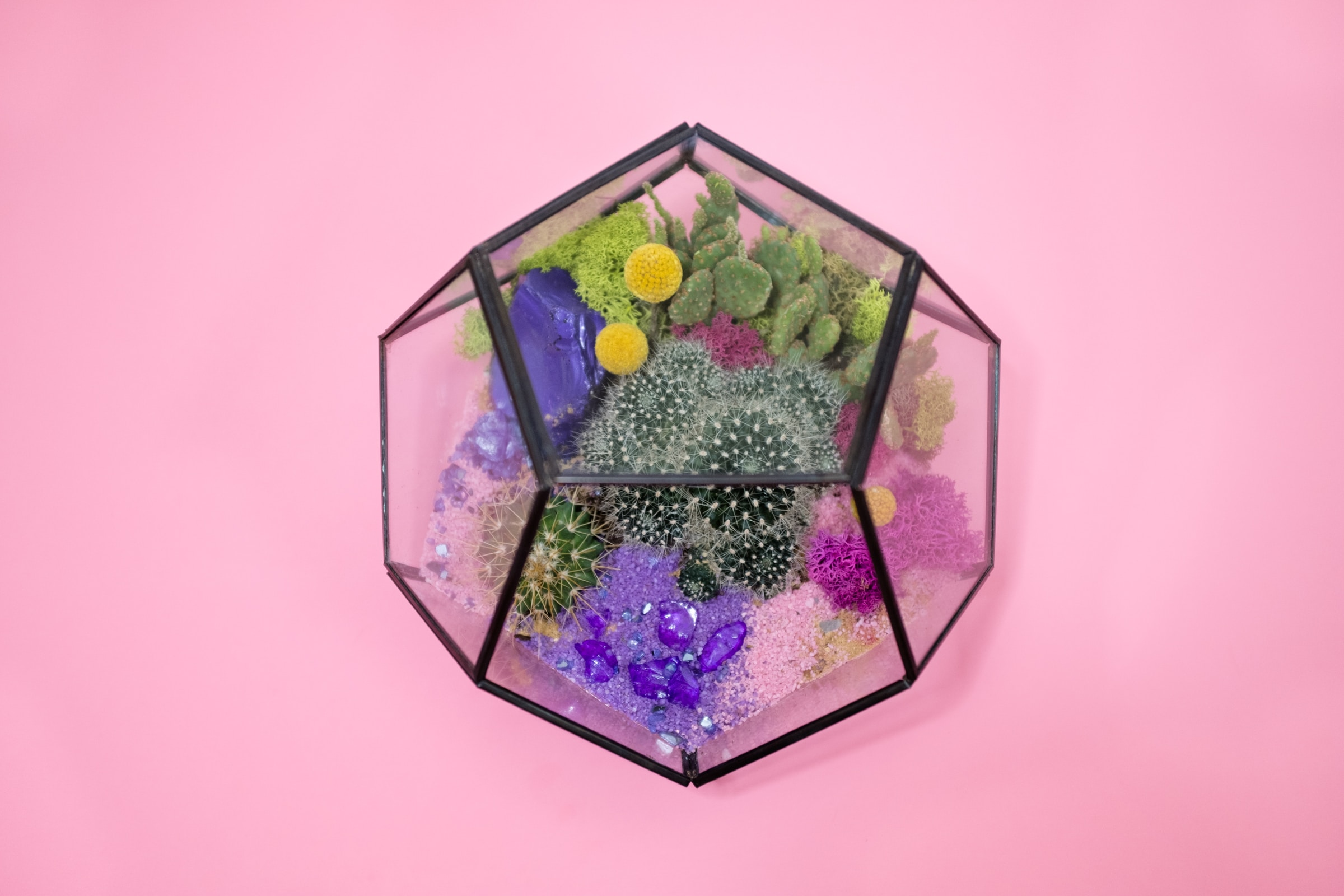 Best Terrariums Buying Guide and Reviews