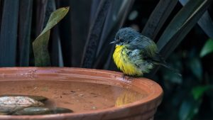 11 Best Bird Baths for Any Garden